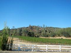 Langtry vineyards