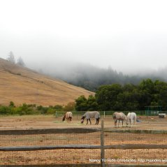 Nicasio Valley horse ranches