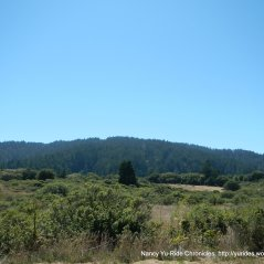 part of Pt Reyes National Seashore area