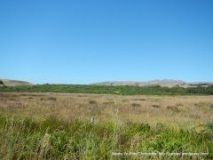 Bear Valley Rd-Olema marshes