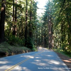 back through the redwoods