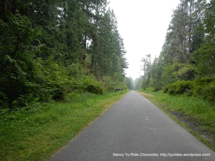 tree-lined trail
