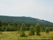 dense forested mountains side