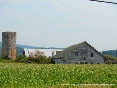 corn field and tower