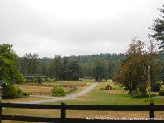 expansive horse paddocks