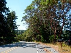 Madrona tree lined road-Madrona Way