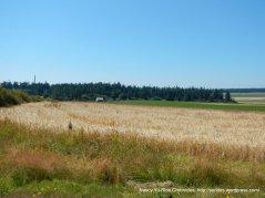 organic grain field
