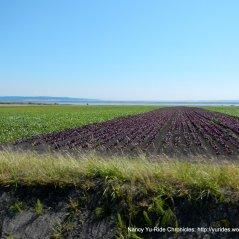 rich coastal farmlands