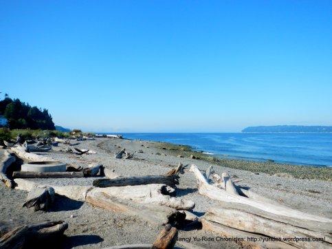 driftwood strewn beach