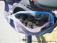 bag of blackberries