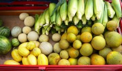 local fruit/corn