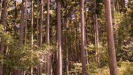 acres of woods