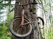 Bicycle in the Tree