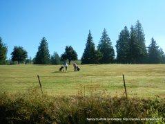Overlook Golf Course