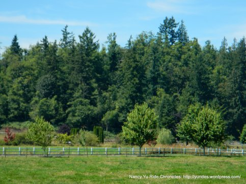lush green tree lined ranchland