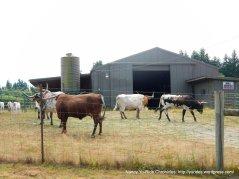 long horn ranch