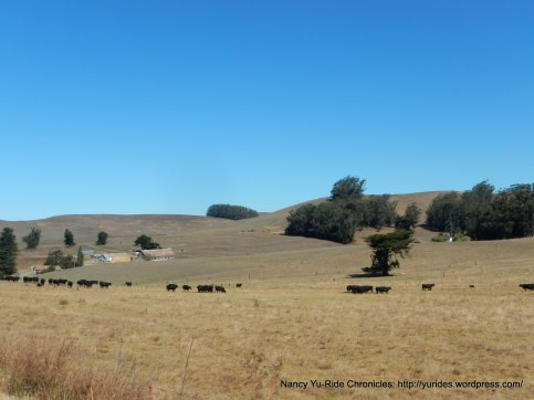 cattle ranches