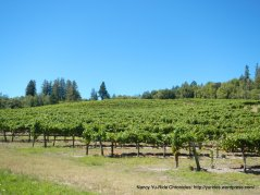 Graton vineyards