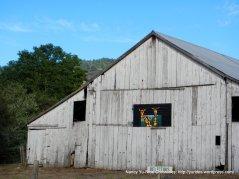 giraffes in the barn