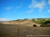 golden hills of Nicasio