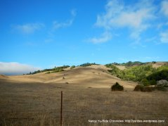 golden hills of Nicasio