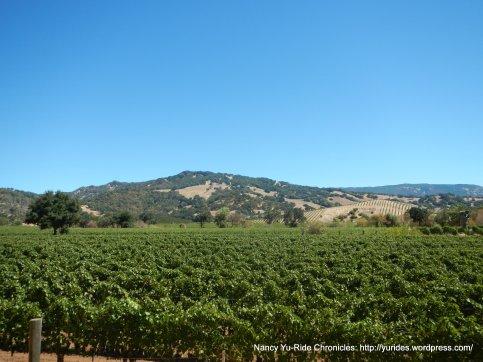 acres of vineyards