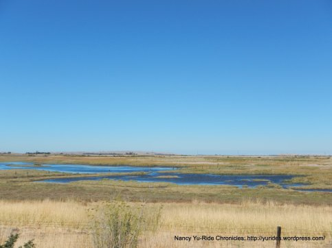sloughs along Grizzly Bay