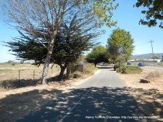 Bay Trail to Gilman St
