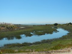 wetlands & marshes