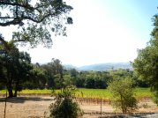 Sunol vineyard