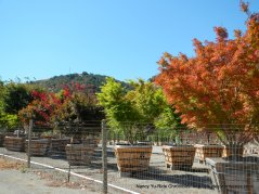 Crest Valley Tree Nursery