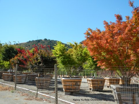 Crest Valley Tree Nursery