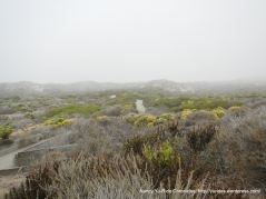 trails leading out to the dunes-coastal shrubs