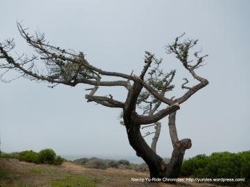 pruned cypress