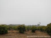 avocado groves