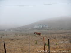 pastoral land