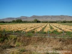 fresh cut crops