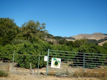 avocado farms