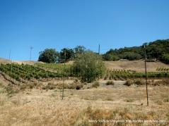 Green Valley vineyards