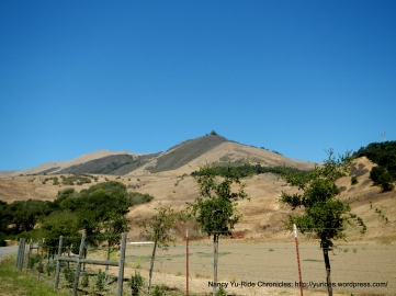 golden hillsides