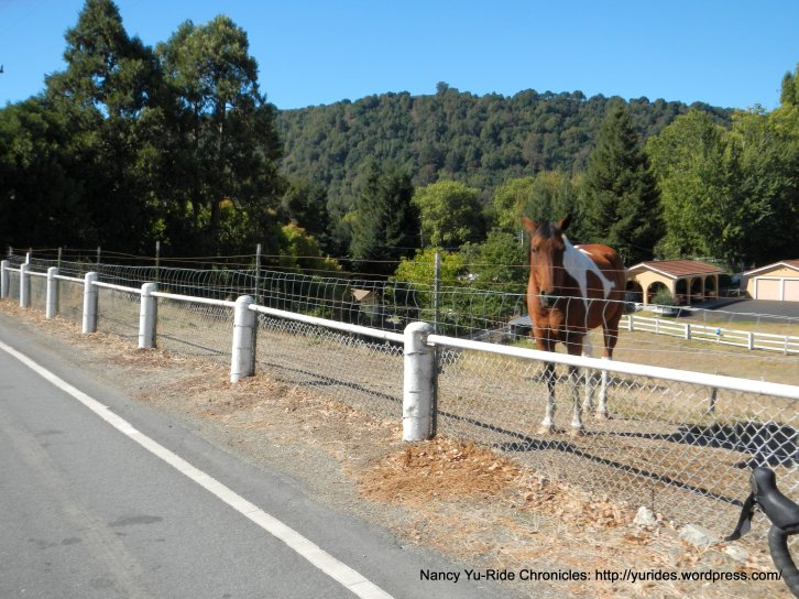 horse ranch-palo Verde