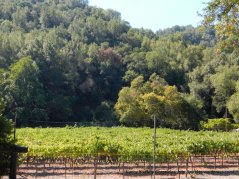 Twining Vine vineyards