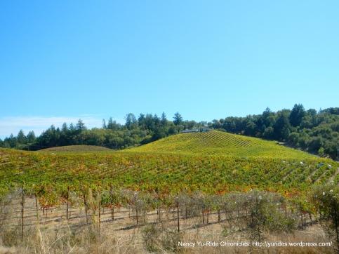 Dry Creek Valley-hillside vineyards