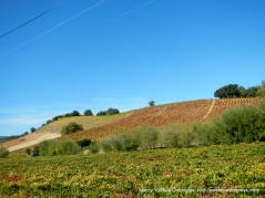 patchwork vineyards