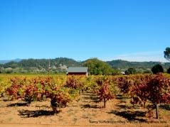 crimson vines