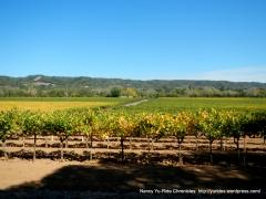 Dry Creek vineyards