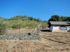 Dry Creek Olive Co
