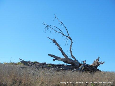 fallen bare tree