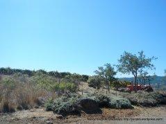 Rockpile landscape