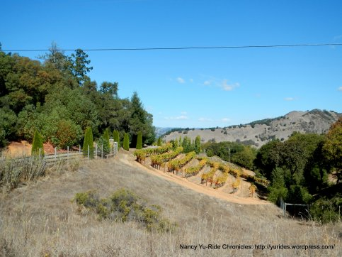 hillside vines